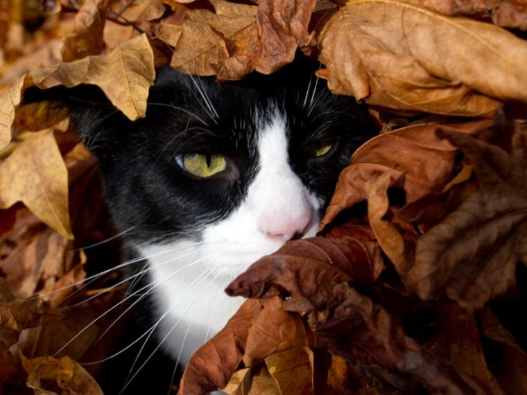 Image: Cat Leaves