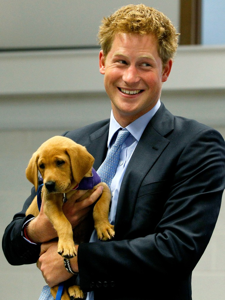 Image: Britain's Prince Harry holds Veyron, an eight week old puppy, during a visit to the charity Canine Partners Training Centre, in Midhurst in southern England