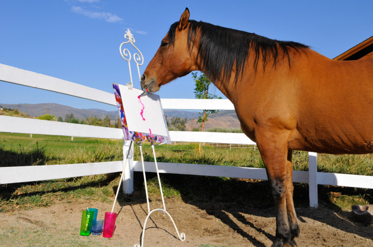 Cholla the painting horse works on his latest masterpiece at his owner Renee Chambers' ranch in Reno, NV, Wednesday, Oct. 1, 2008. Cholla's paintings are set to be exhibited in Italy from Oct. 18- Nov 2. (AP Photo/Scott Sady)