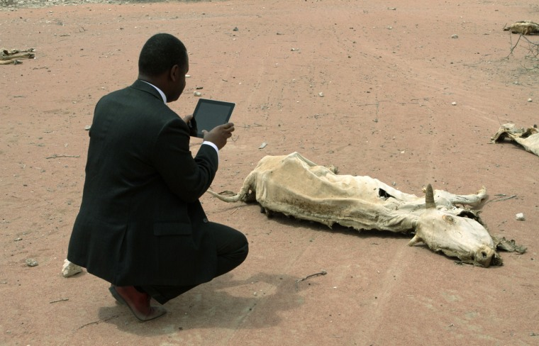 Image: An aid worker using an iPad films the rotting carcass of a cow in Wajir near the Kenya-Somalia border