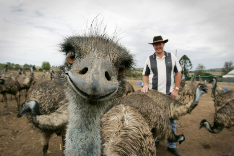 Stephen Schmidt from Try It Emu Farm in Marburg, Australia - 30 Mar 2007