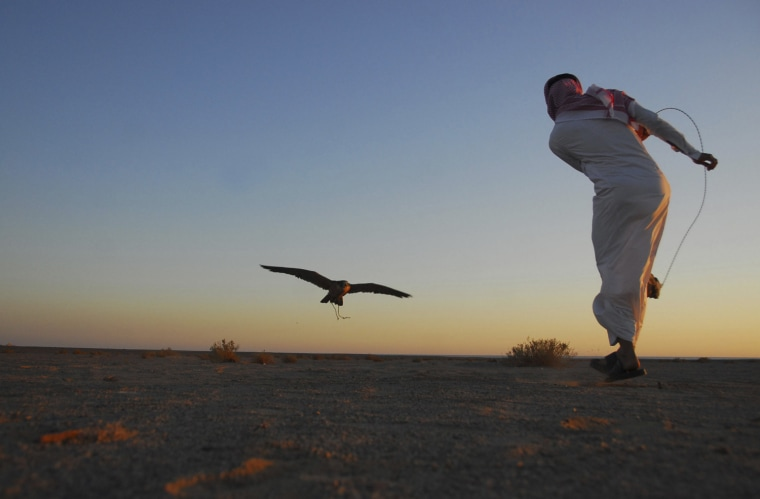 Image: A falconer trains his hunting falcon in the desert near Tabuk
