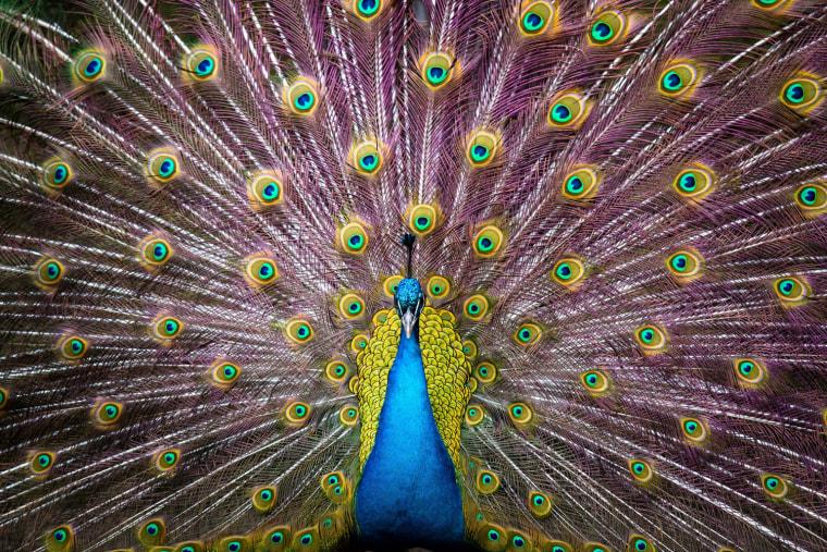 Image: Animal Inventory at Hagenbeck Zoo Hamburg