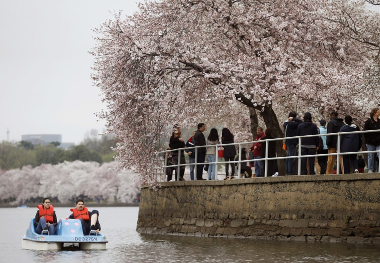 Image: People paddle a boat on the Tidal Basin during the first bloom of the cherry blossoms in Washington