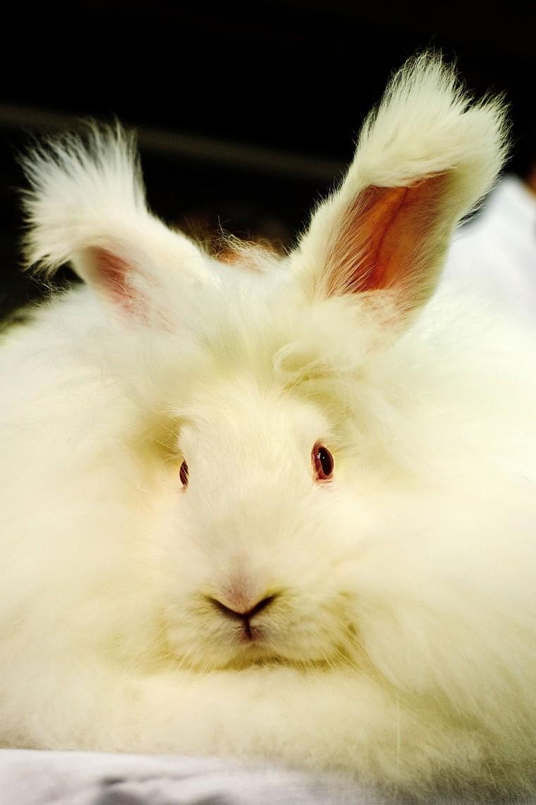 Image: Animal Enthusiasts Enjoy The UK's Rabbit Grand National