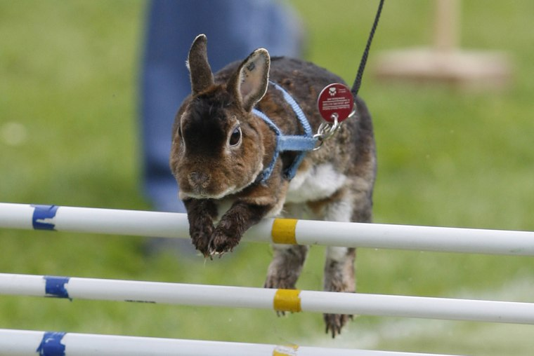 Image: Rommerz Rabbit Hopping Competition
