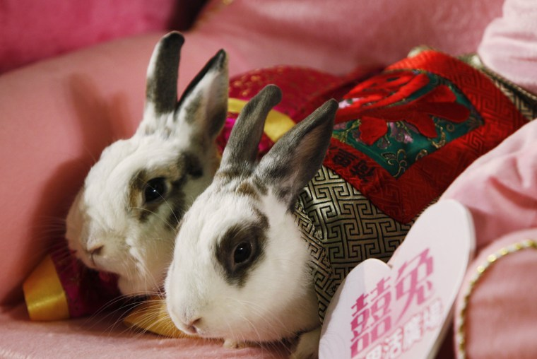 Image: Sterilized pet rabbits dressed in traditional Chinese costumes are pictured during a wedding ceremony in Hong Kong