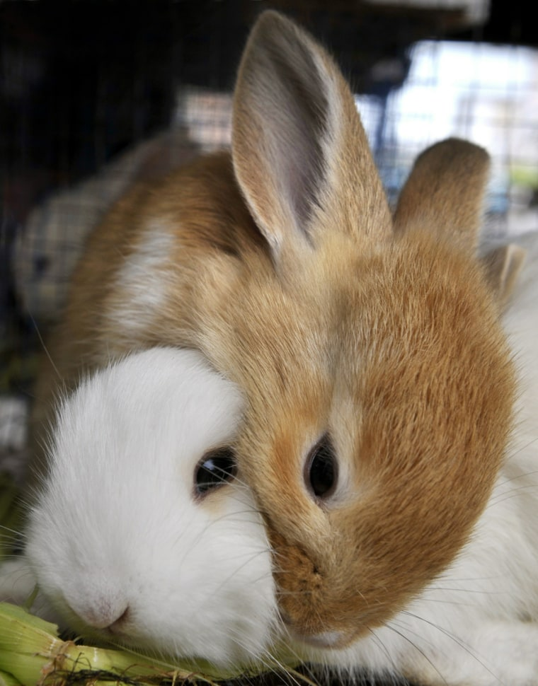Image: Rabbits are offered for sale at Glodok m