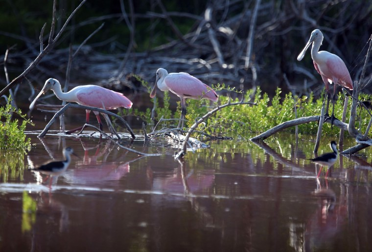 Image: Florida Scales Back Everglades Sugar Land Deal