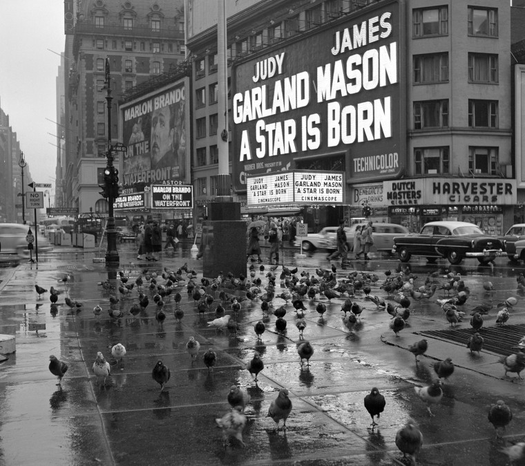 "Pigeons gather in Times Square on a rainy day in 1954 in front of the marquee for ""A Star is Born"" starring Judy Garland.."