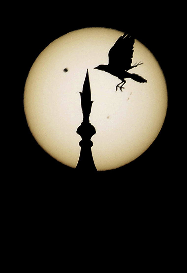 Image: A bird comes in to land atop one of the domes of the landmark Taj Mahal as Venus, top left, begins to pass in front of the sun