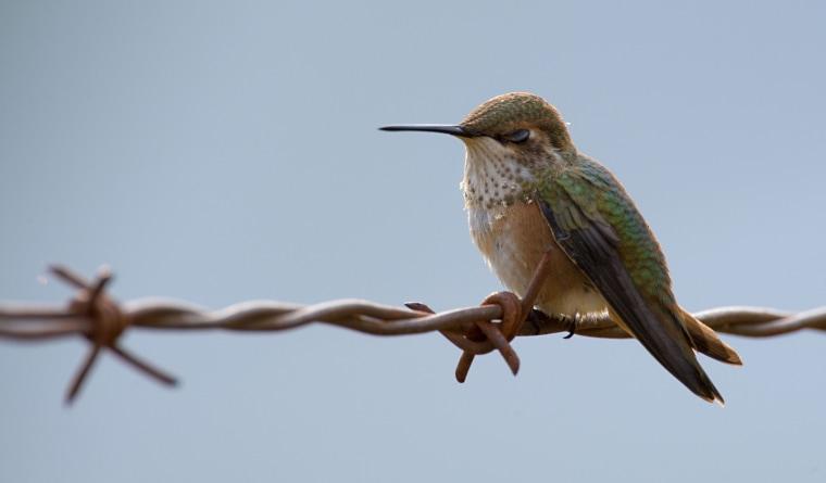 Image: Nectar Seeker