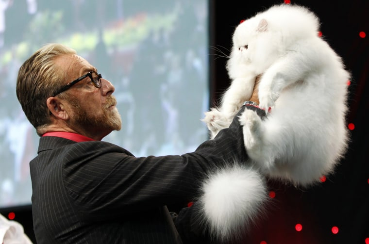 Image: A judge inspects a White Persian during the World Cat Show in Zagreb