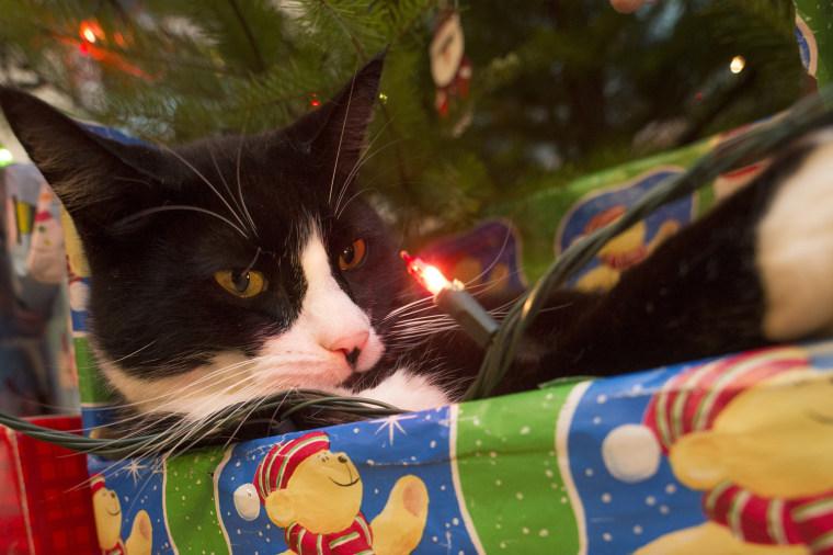 Image: Feline for Christmas