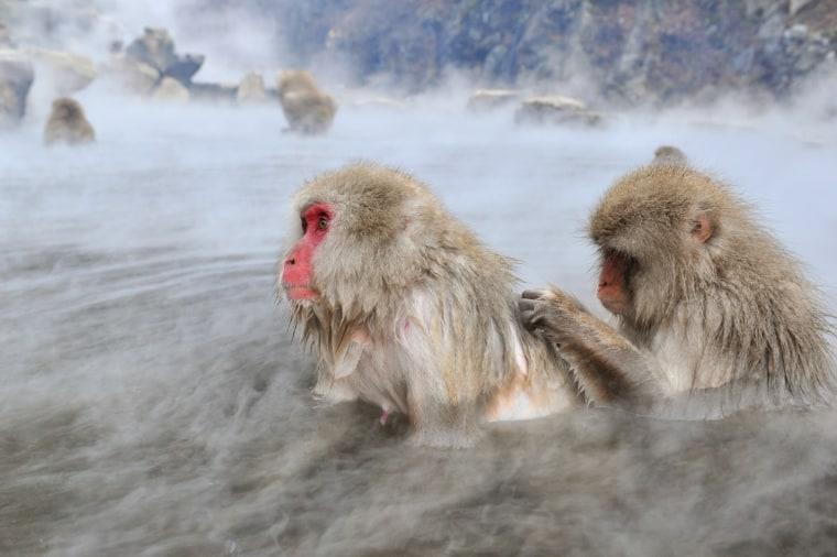 Image: JAPAN-LIFESTYLE-TOURISM-ANIMALS