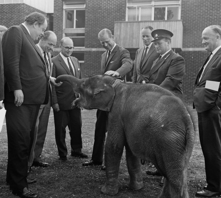 Duke Meets Elephant