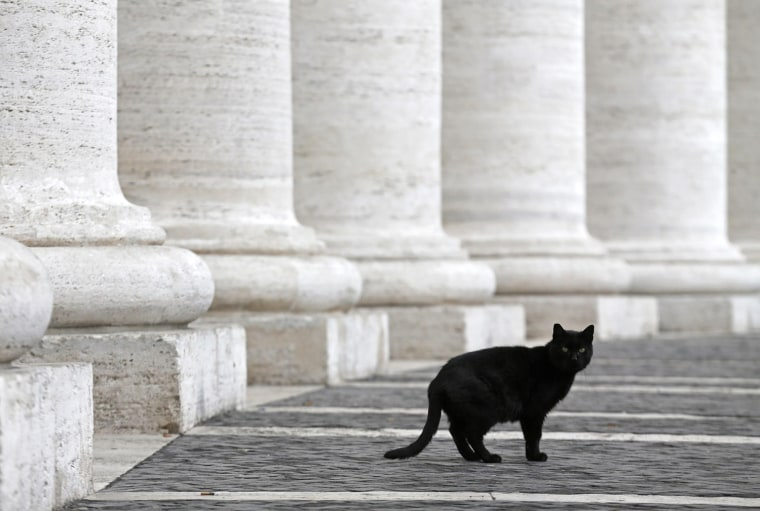 Image: A cat makes his way through the colonnade in St Peter's Square at the Vatican