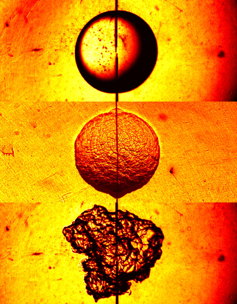 Three faces C.K. Law (faculty), Swetaprovo Chaudhuri (research scholar), Fujia Wu (graduate student) Department of Mechanical and Aerospace Engineering Contact: sweto@princeton.edu These three images are snapshots of a spark-ignited expanding flame in different environments of the same hydrogen-air mixture. The top flame shows the ideal, reference case of a stable, smooth flame surface in a quiescent environment at atmospheric pressure. The middle flame is taken under elevated pressure simulating that within an internal combustion engine. The bottom flame is taken in a highly turbulent environment simulating another aspect of the engine interior. All images were taken at 8000 frames per second, using schlieren photography. The radius of the top flame is 11.4 millimeters.