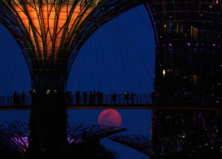 "Image: Tourists walk on the elevated skywalk of the Supertrees Grove at the Gardens by the Bay in Singapore, as the ""super moon"" rises at dusk"