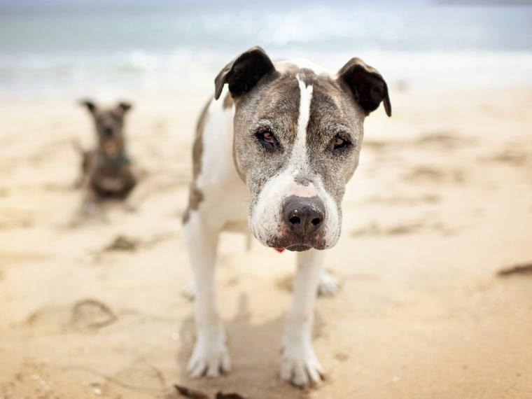 Image: Sunny the dog