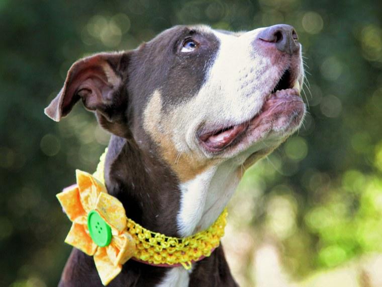 Image: Blossom the dog