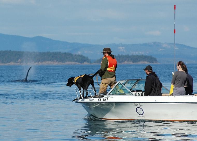 Image: Killer whale, dog, boat