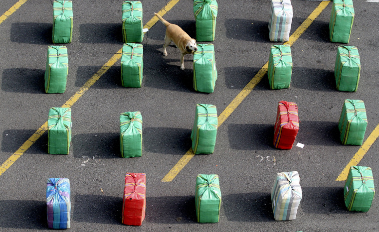 A dog stands near packs of marijuana confiscated in Cali