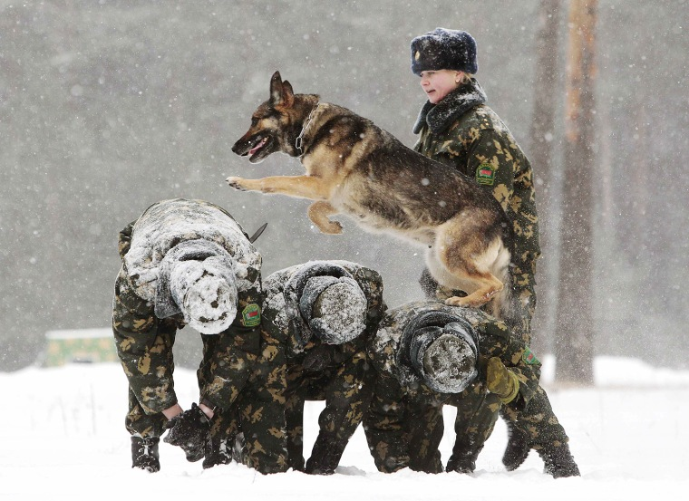 Image: A Belarussian military instructor trains her dog in a frontier guards' cynology centre near the town of Smorgon