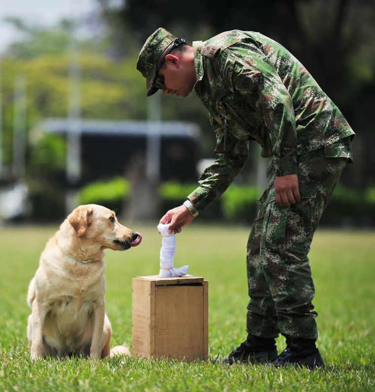 COLOMBIA-ARMY-SNIFFER-DOGS-LANDMINES