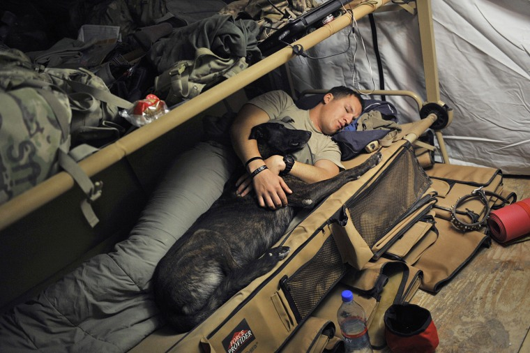 Image: A soldier with his K-9 partner