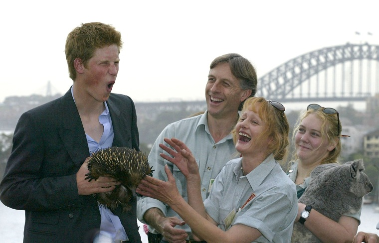 Prince Harry holds Echidna