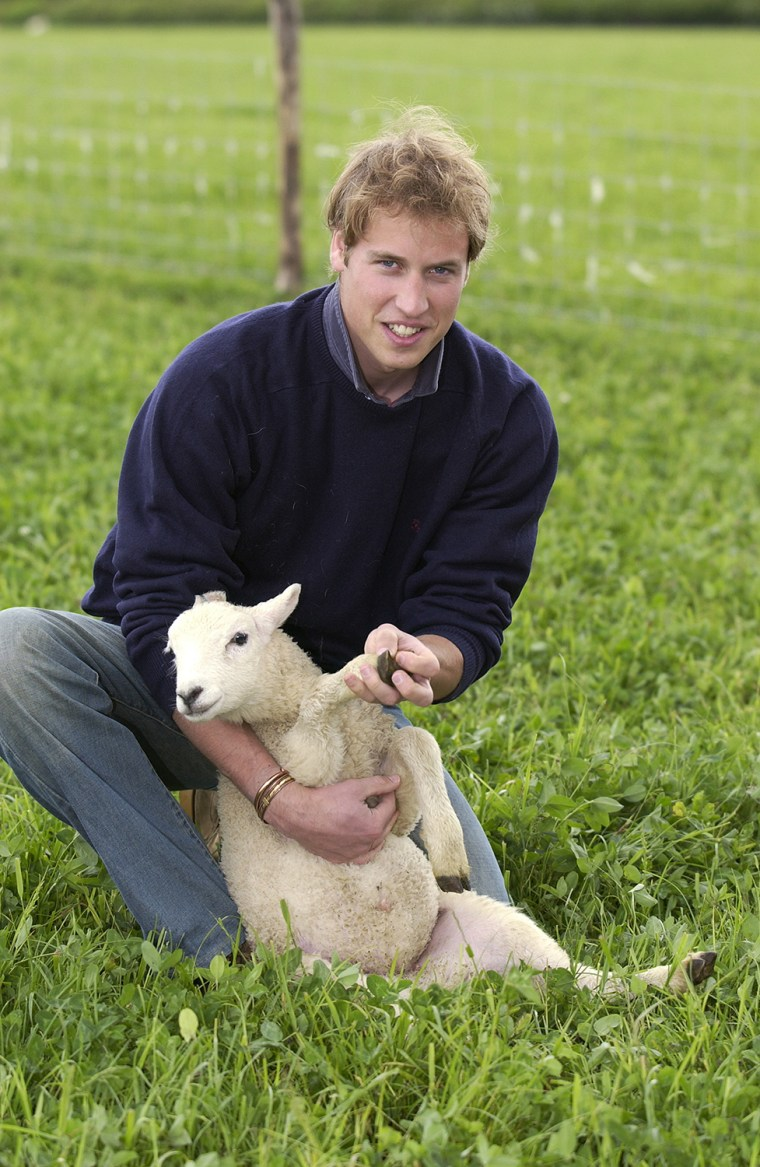 William Holds Sheep