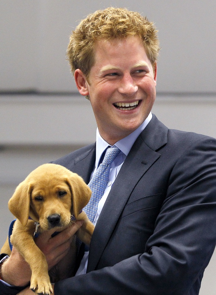 Prince Harry Visits Canine Partners Organisation