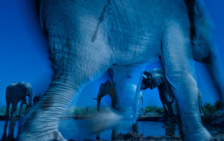"Essence of elephants, Greg du Toit of South Africa Wildlife photographer of the year Ever since he first picked up a camera, Greg has photographed AFrican elephants. ""For many years,"" he says, ""I've wanted to create an image that captures their special energy and the state of consciousness that I sense when I'm with them.  This image comes closest to doing that."" The shot was taken at a waterhole in Botswana's Northern Tuli Game Reserve, from a hide (a sunken freight container), that provided a ground-level view. Greg chose to use a slow shutter speed to create the atmosphere he was after and try ""to depict these gentle giants in an almost ghostly way."""