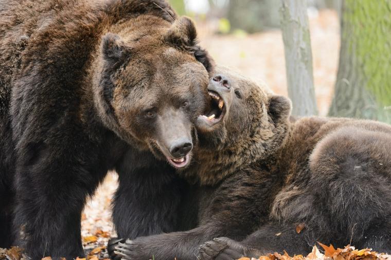Image: New brown bear enclosure in Poznan Zoo