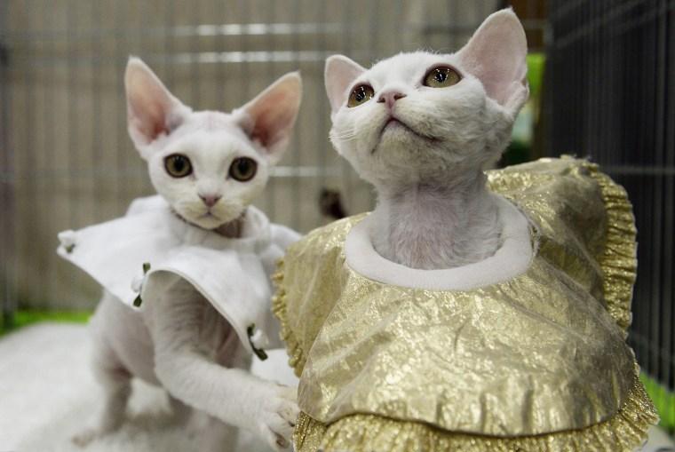 Image: Cat exhibition in Neuhausen