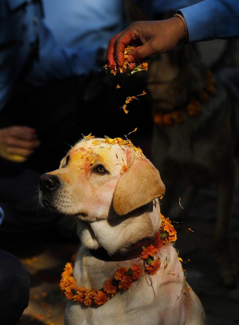 Image: Dog worship day during Tihar festival