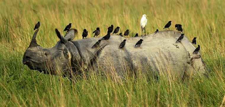 Image: Kaziranga National Park reopens for visitors