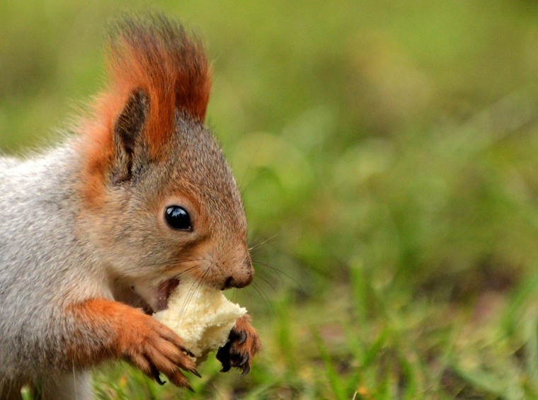 Image: RUSSIA-WEATHER-SQUIRREL-FEATURE