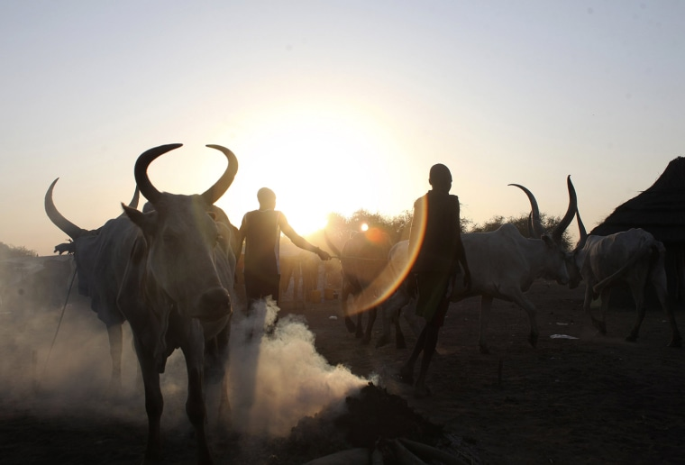 Image: Two men walk past cows in Minkaman, in Awerial county, Lakes state, in South Sudan