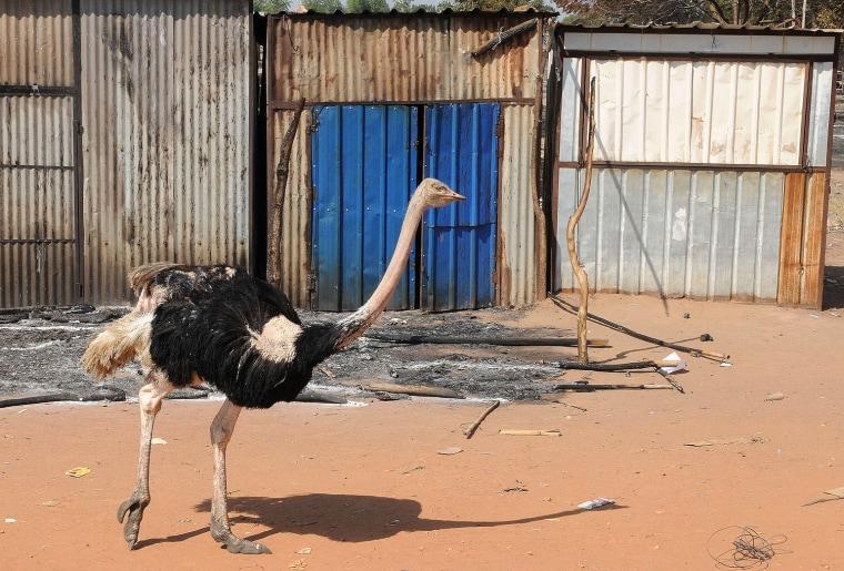 Image: SSUDAN-UNREST-ANIMALS-OFFBEAT