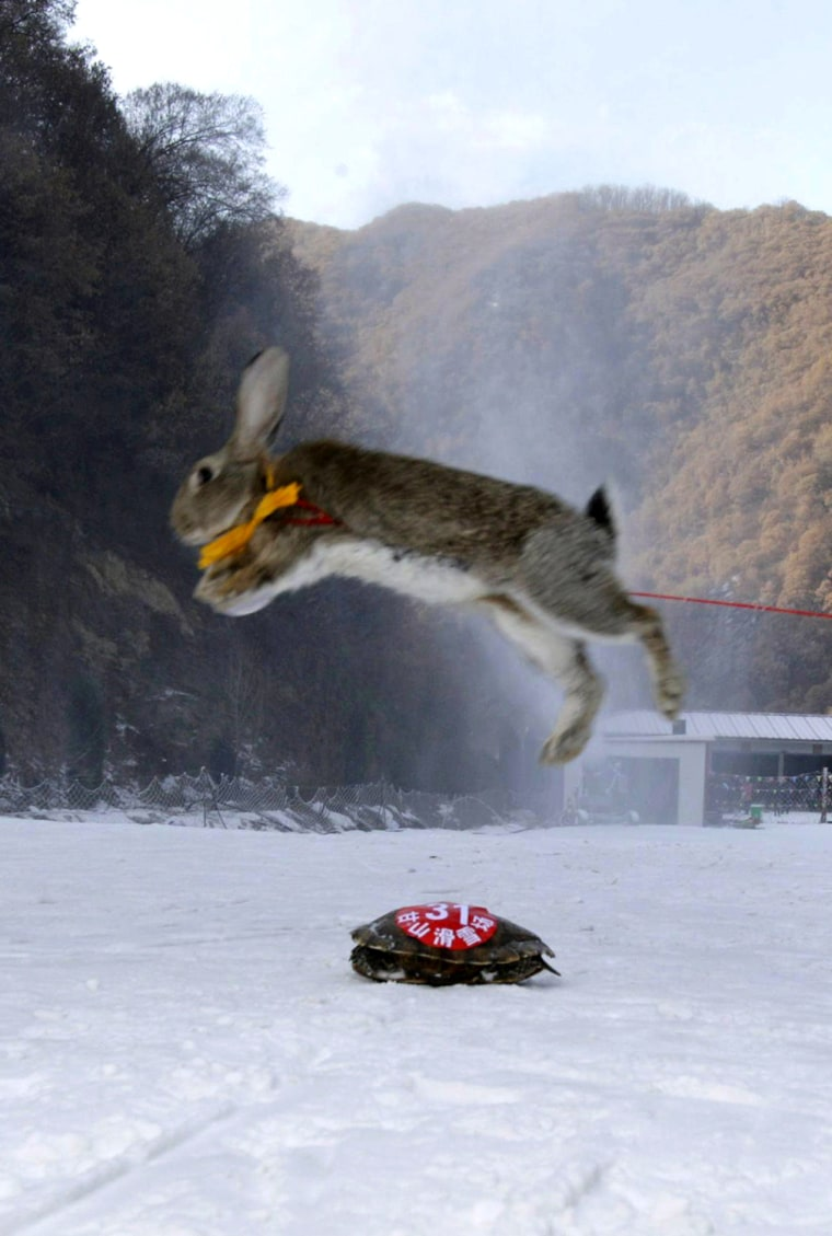 Image: CHINA-ANIMAL-SKI-OFFBEAT