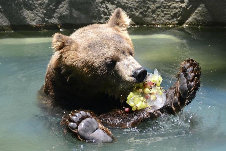 Image: A bear eats frozen fruits to cool off  in Rio de Janeiro's zoo