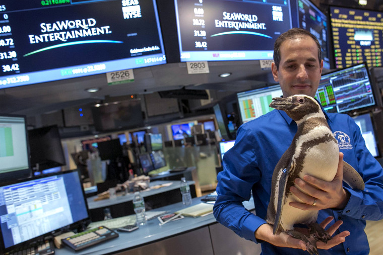 "Image: ""Pete the Penguin"" of SeaWorld Entertainment is carried by a handler on the floor of the New York Stock Exchange"