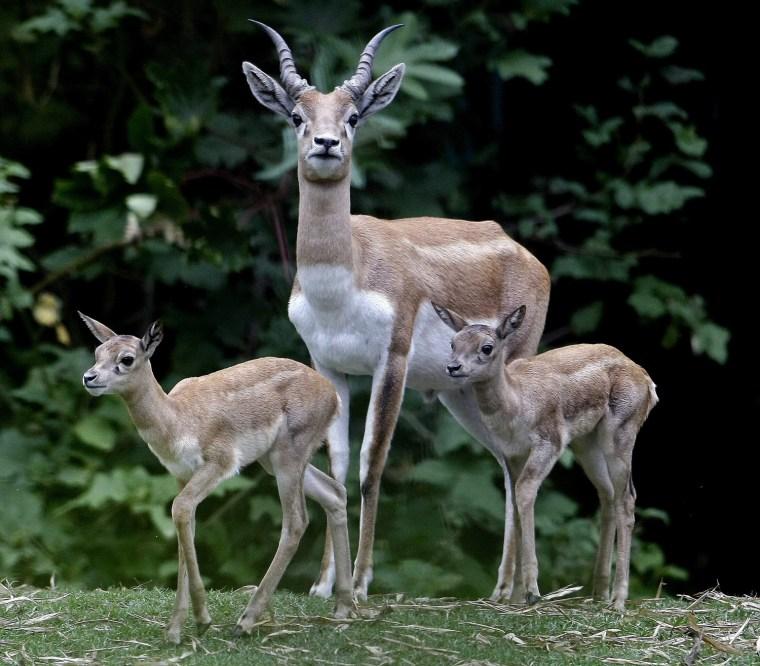 Image: Santa Fe Zoo in Medellin