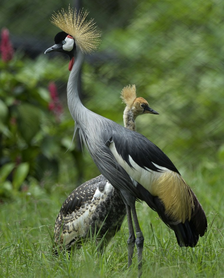 Image: COLOMBIA-ANIMALS-ZOO