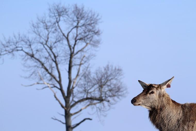 Image: BELARUS-NATURE-ANIMAL