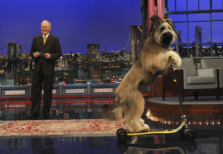 Stupid pet tricks with Late Show host David Letterman on the Late Show with David Letterman, Thursday Feb. 24, 2011 on the CBS Television Network.  Photo: Heather Wines/CBS ©2011 CBS Broadcasting Inc. All Rights Reserved.