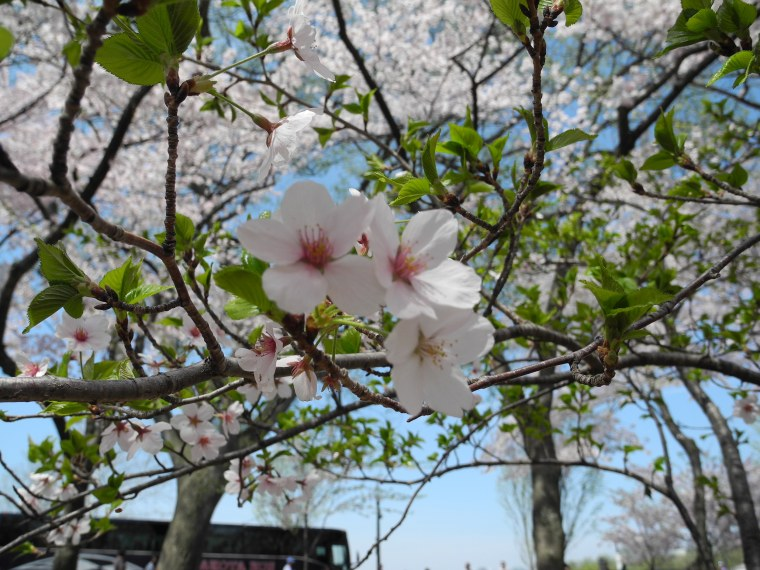 Despite the mobs, there were a few quiet areas to soak up the natural beauty of the blooms.