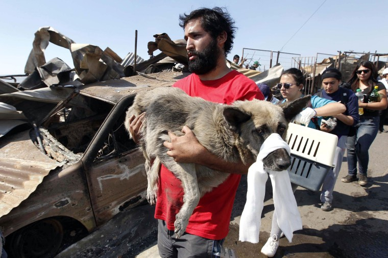 Image: A resident carries an injured dog at the location where a forest fire burned several neighbourhoods in the hills in Valparaiso city